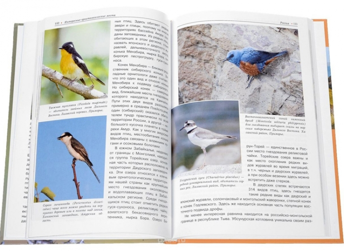 Guide for birdwatchers in Russia