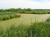 Restoration of peatbogs in Moscow region and creation of education center in Taldomsky district
